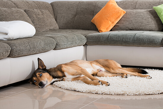Two Paws Up For A Pet-Friendly Home