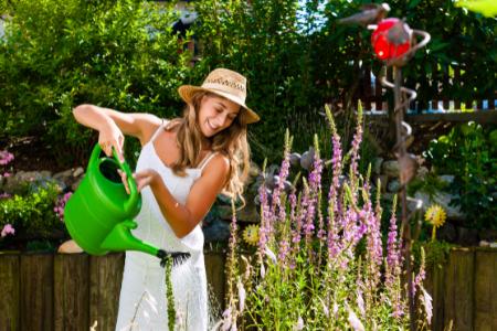 woman in sun hat watering tall purple flowers in her backyard