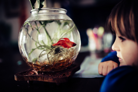Girl looking at the fish in her small bedroom.