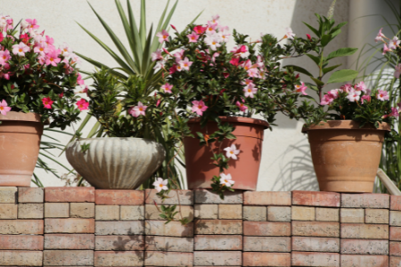 Potted plants with pink flowers on a wall.